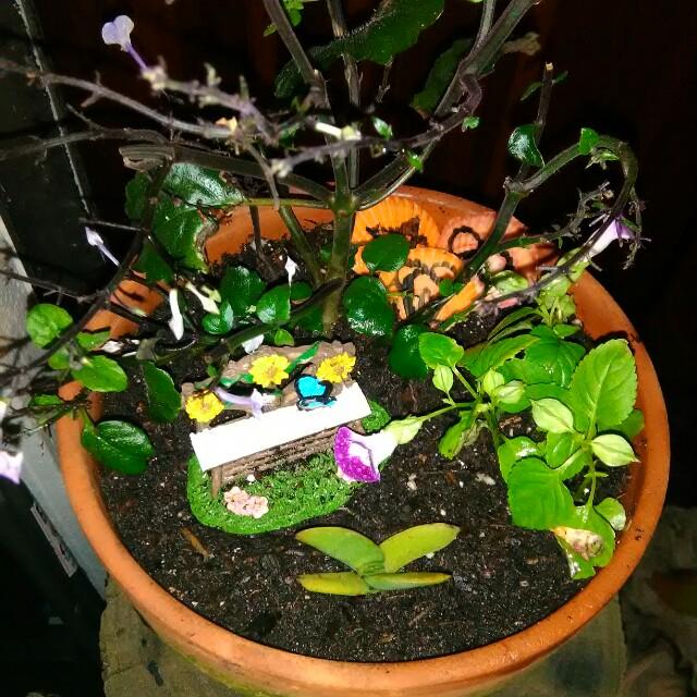 Gnome/Fairy Garden Addition