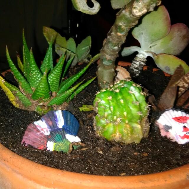 Succulent Hybrid Variety