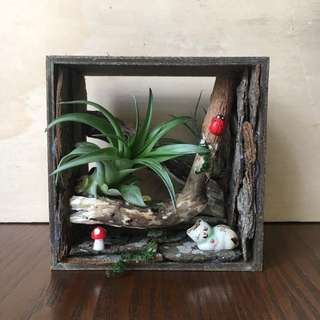 Airplant Terrarium Handmade gift set air plant with mini figurines see-through decorative box.Ideal as gift for many occasions. Box size 10x10x6cm  (Does not come with gift box) *air plant used in the display may differ