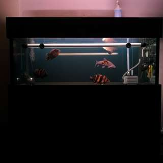 5ft Fish tank set with livestock for sales