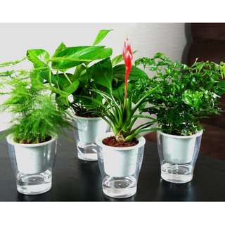 Self watering pot (clear) for hydroponics or indoor plant