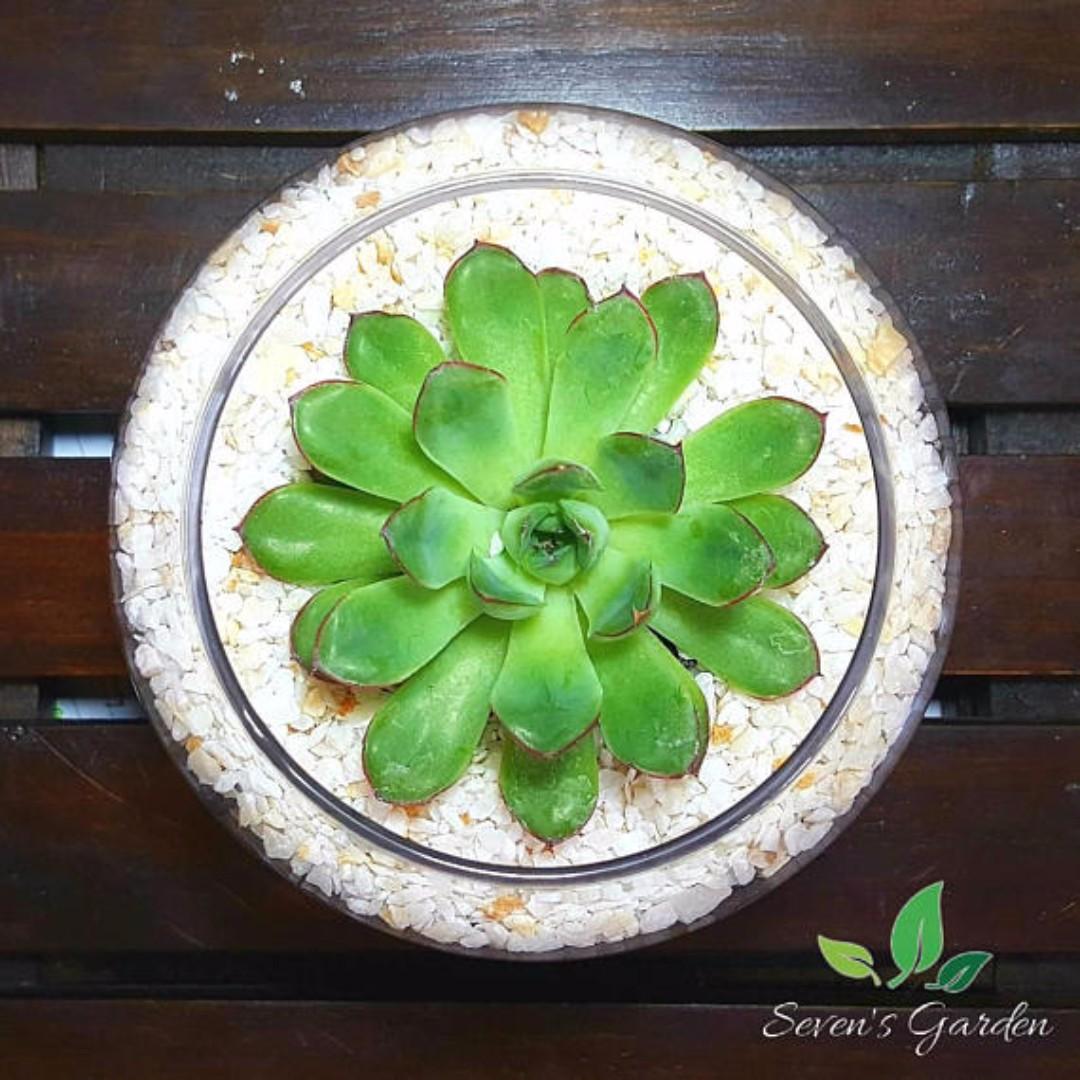 Succulent Terrarium Lucky Home Furniture On Carousell