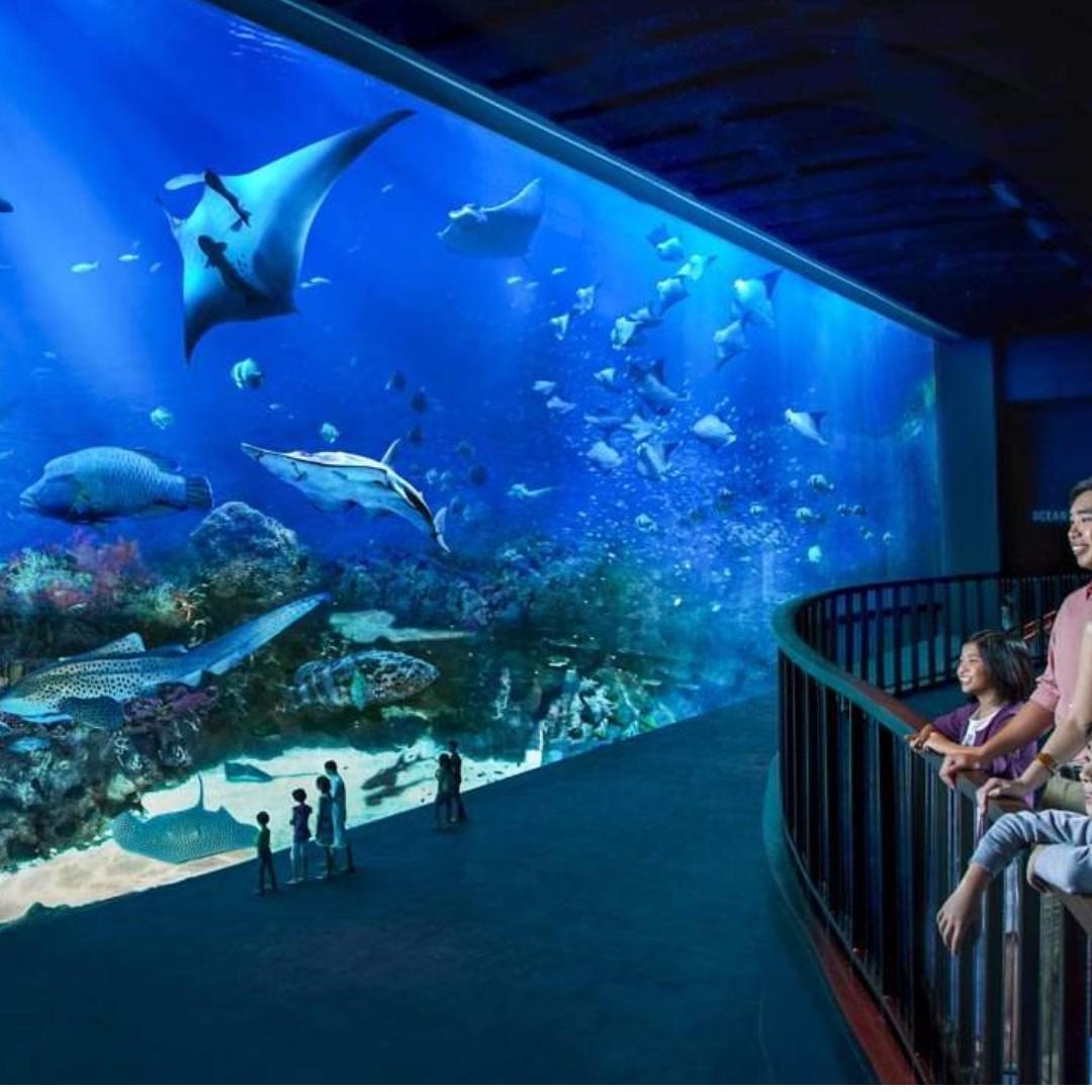 S.E.A. Aquarium - Adult
