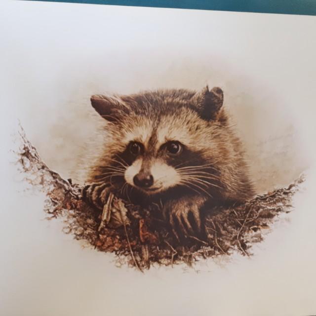 Signed artwork by Beverley Spicer
