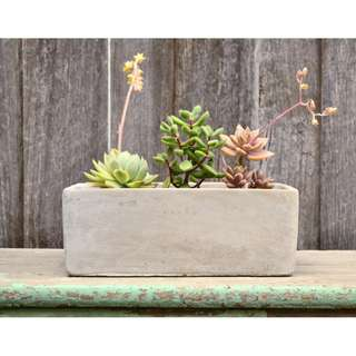 OUT OF STOCK Modern Simplistic Grey Concrete Rectangular Planter Box