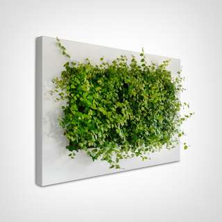 "LivePicture Living Wall Art for Home Decoration Green Wall Picture Frame for Real Live Planting 53"" Free Local Shipping"