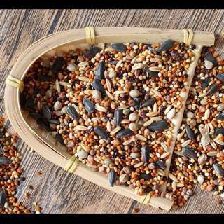 Budgies Parrot Food (6 In 1) Mixed Seed
