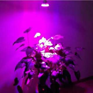 LED植物栽培燈  /9W