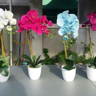 Artificial Orchid With Melamine Pot