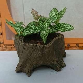 Lovely plant in wood like pot