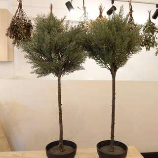 Ikea fake plants 假盆栽 (兩個一起賣)