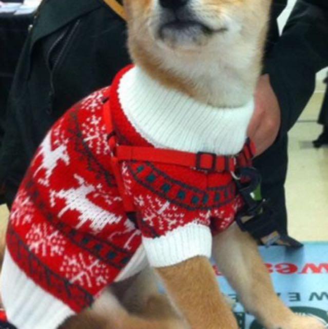 Brand new Christmas dog sweaters