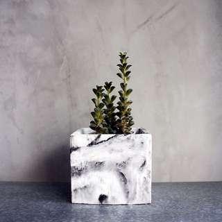 Marble Concrete Pot
