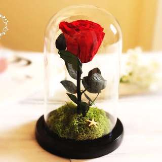 Anniversary gift birthday gift preserved rose girlfriend couple proposal beauty and the beast Beauty and the beast enchanted rose preserved rose glass dome bell jar girlfriend gift anniversary gift girlfriend present couple gift birthday gift bff gift