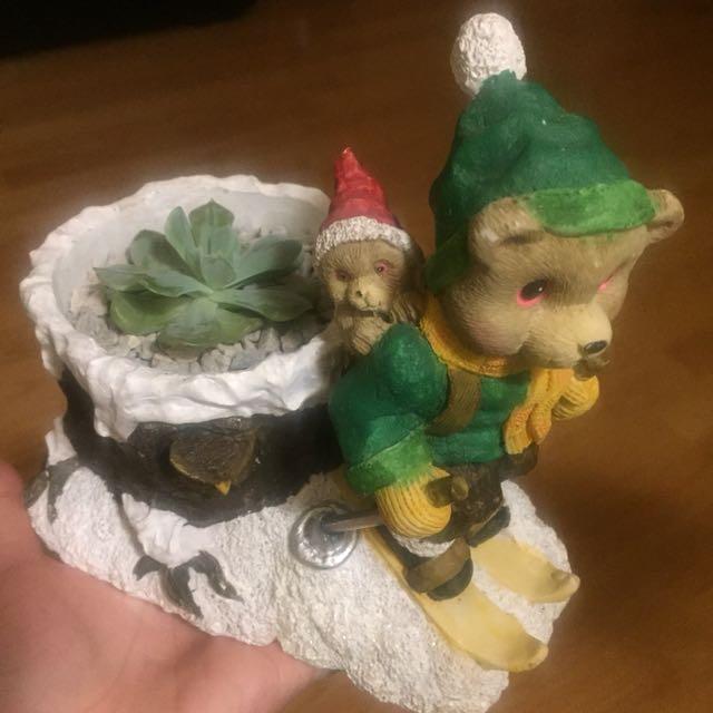Succulent with teddy bears