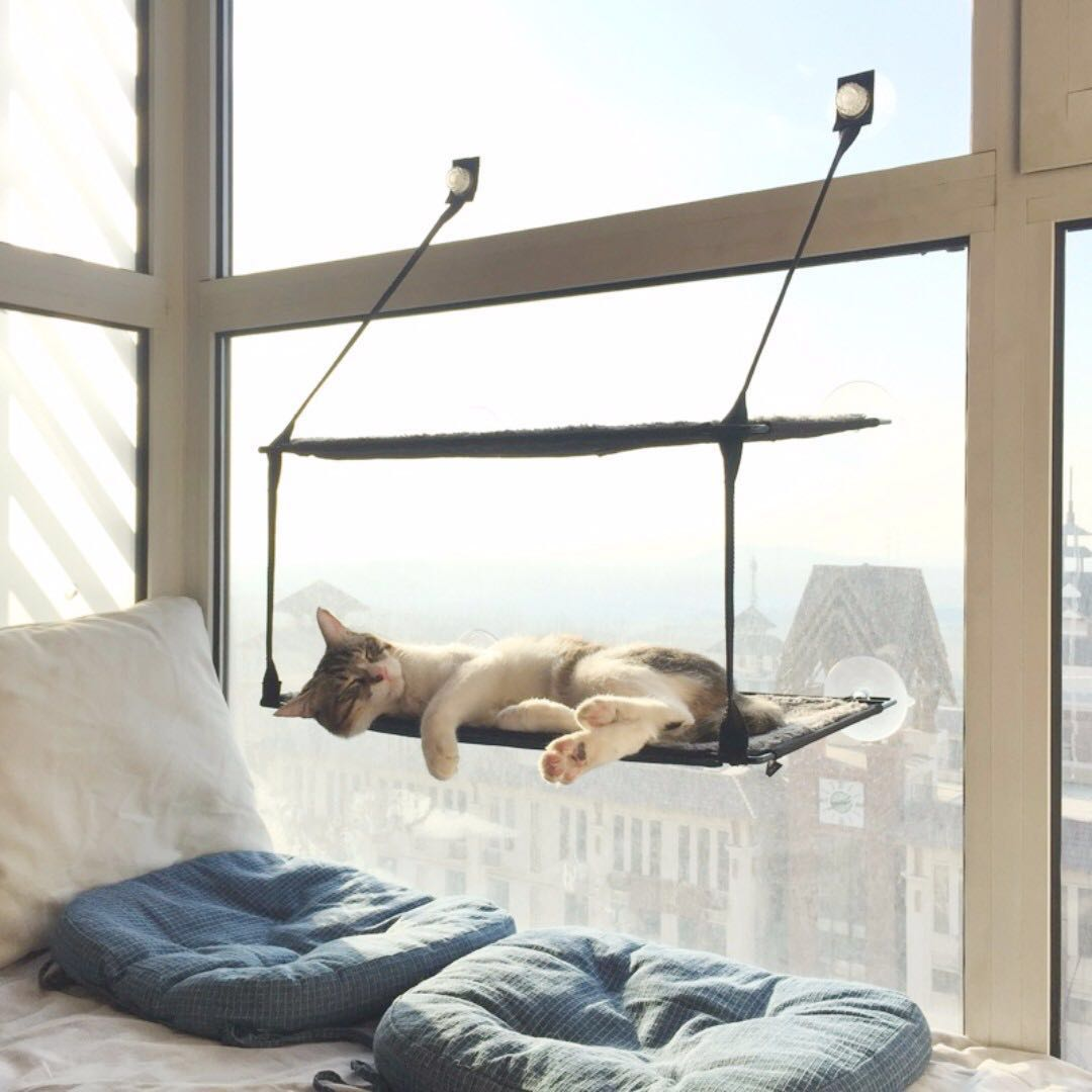 photo photo     branded single   double layer cat window hammock   perch  bed pet      rh   sg carousell