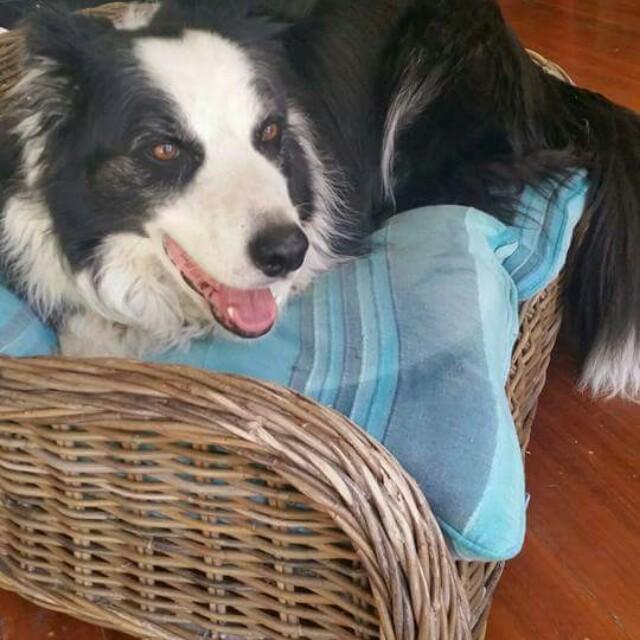 Cane xlarge dog bed