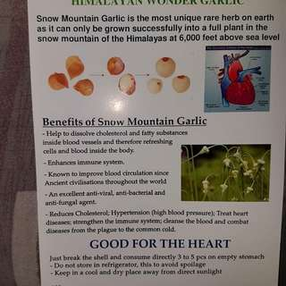 Snow mountain garlic (New Stock)