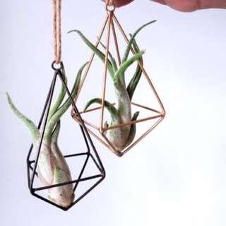 Hanging Geometric (Tall)