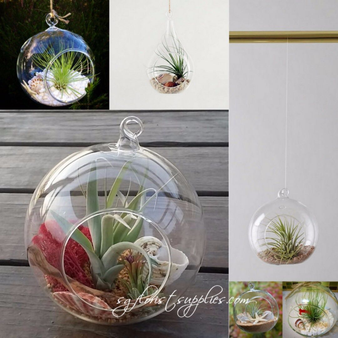 Air Plants Collections Air Plant Hanging Glass Terrarium Gardening