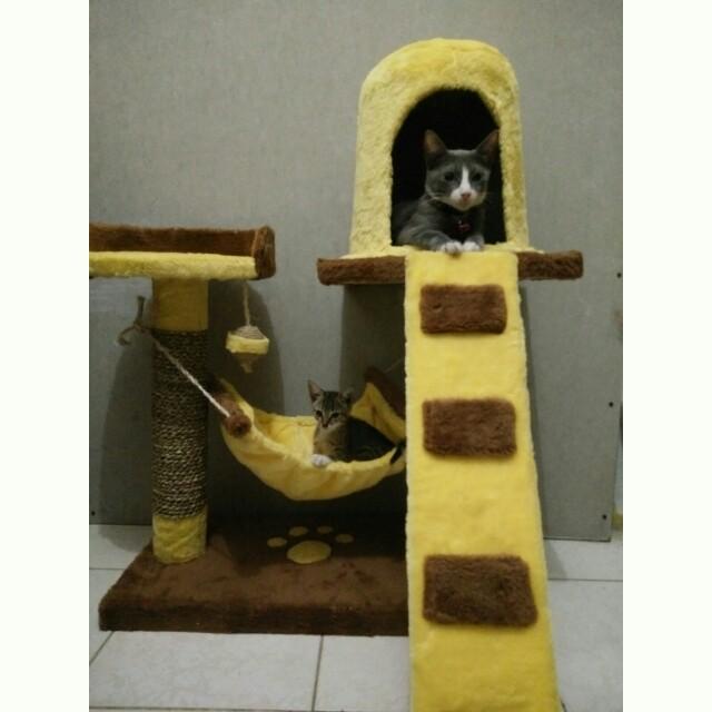 Cat Condo Mainan Kucing