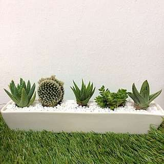Succulent Boat ( 5 succulents and cactus in ceramic pot )