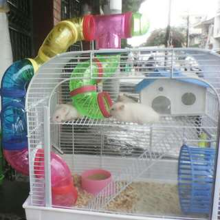 Selling this hamster cage ☺☺ O.P(950.00)