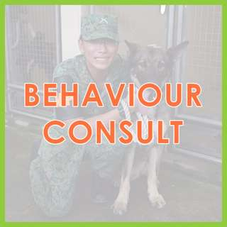In-Person Behaviour Consultation - US Certified, AVA-Accredited Force-Free Dog Training by Pawrus Dog Training Academy