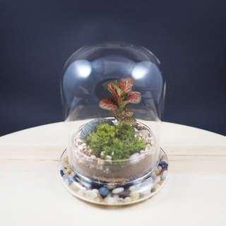 Domo Terrarium (Mini) - DB1