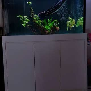 4ft by 2.5ft by 2.5ft cabinet tank