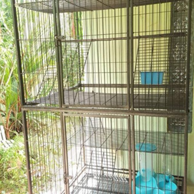 Double storey cage for cat