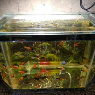Aquarium Full Set + ikan hias