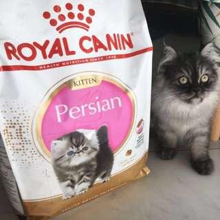 BN Royal Canin Kitten Persian Dry Cat Food