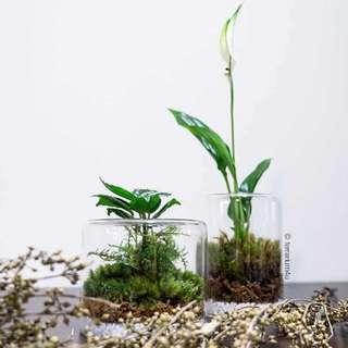 Moss Terrarium - Moss Vase