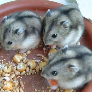 Hamster Boarding!