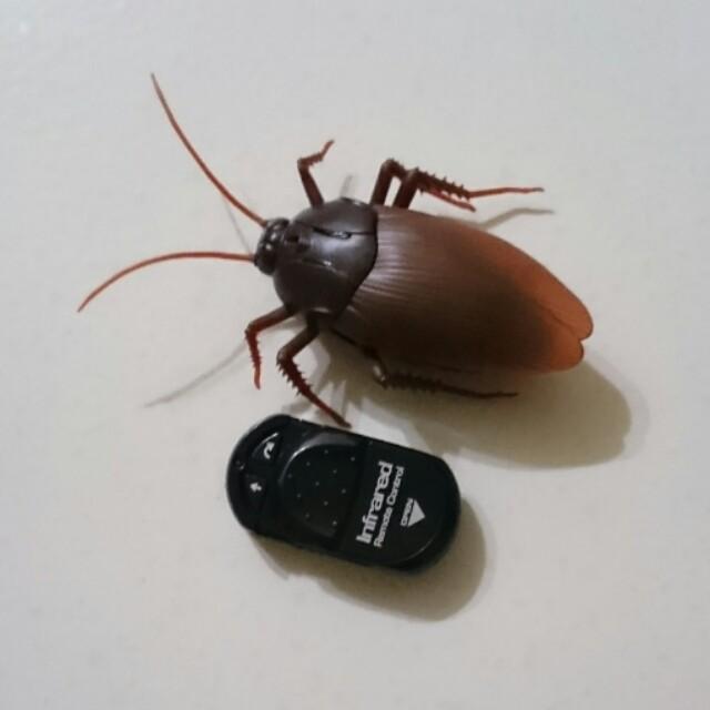 遙控蟑螂玩具