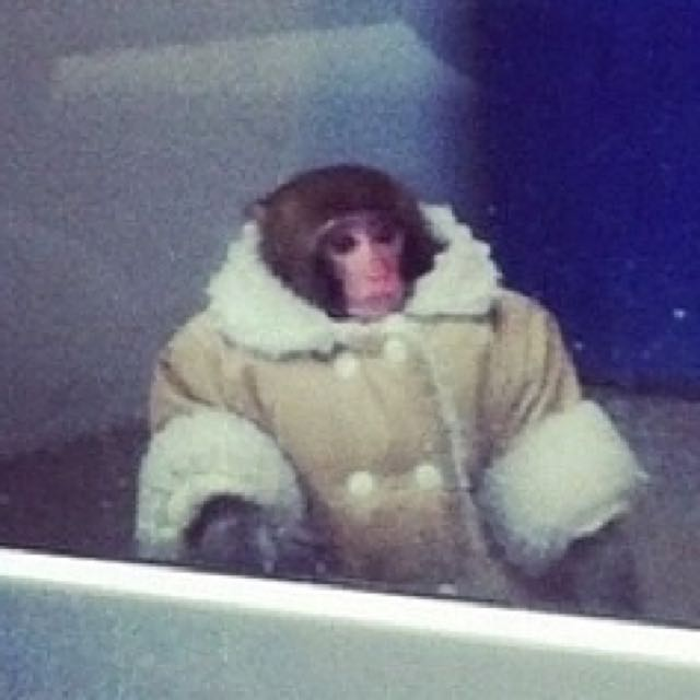 *CHIMP PRICES* STAY TUNED FOR MASSIVE COATS