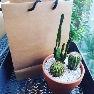 Little Cactus Garden Pot