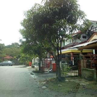 Cutting trees RacunTebang Pokok Cleaning