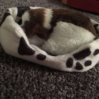 Stuffed dog and bed