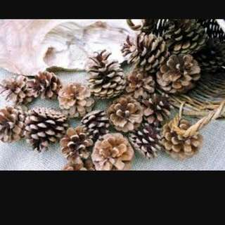 Rustic Pinus Dekorasi Craft Supply