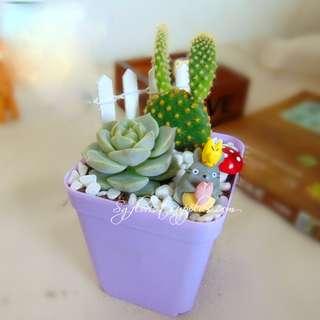 Christmas Gift Exchange-Plant Gifts-Door Gifts-Cactus Garden