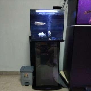 Fluval Flex Fish Tank