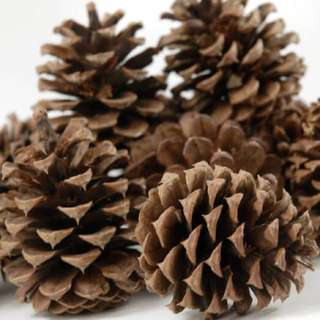 Dried pine cones