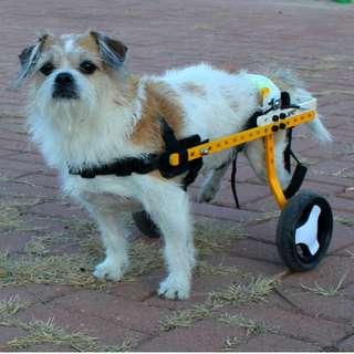 訂做寵物輪椅 ($598包送貨)小型狗貓專用, 年老康復後腿代步殘疾助行架安全保護帶行動托用帶狗狗殘障