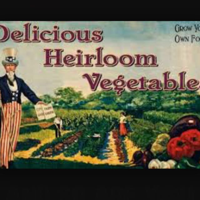Non-gmo Cabbage LATE FLAT DUTCH Seeds  FREE  Shipping 200 Heirloom