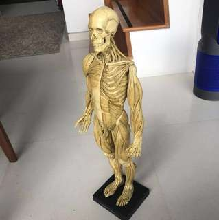 Anatomy tools - Male figure 1:3 scale v1A