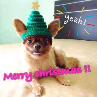 寵物造型帽 耶誕派對 跨年派對 拍照帽 毛線編織 鉤針 聖誕樹帽