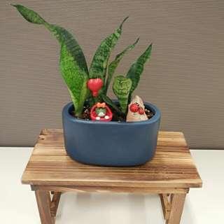 Desktop planter - Snake plant