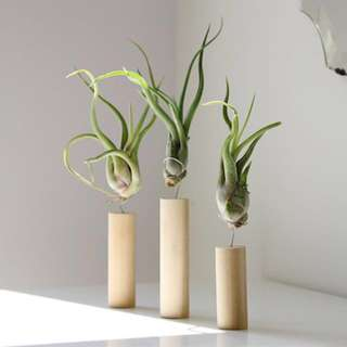 Minimalist Airplant Suspended in Wire and Wood